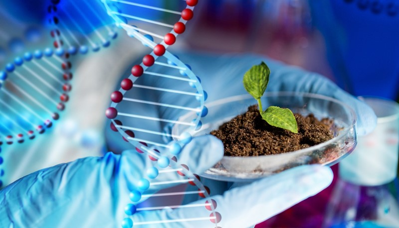 The study provides reference for genetic engineering of heat-resistant food crops to fight global climate change.